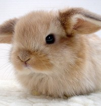 India Bans Animal Testing for Cosmetics!