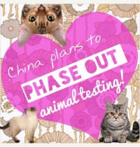 China Plans to Phase Out Cosmetics Animal Testing!